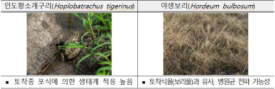 인도황소개구리(Hoplobatrachus tigerinus)  ? 토착종 포식에 의한 생태계 적응 높음  야생보리(Hordeum bulbosum)  ? 토착식물(보리풀)과 유사, 병원균 전파 가능성