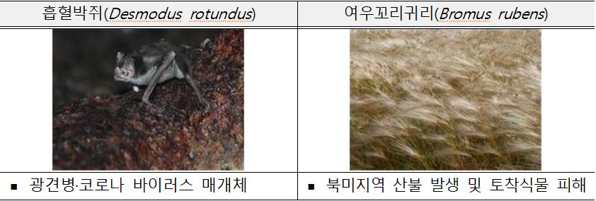 흡혈박쥐(Desmodus rotundus)  ? 광견병·코로나 바이러스 매개체  여우꼬리귀리(Bromus rubens)  ? 북미지역 산불 발생 및 토착식물 피해
