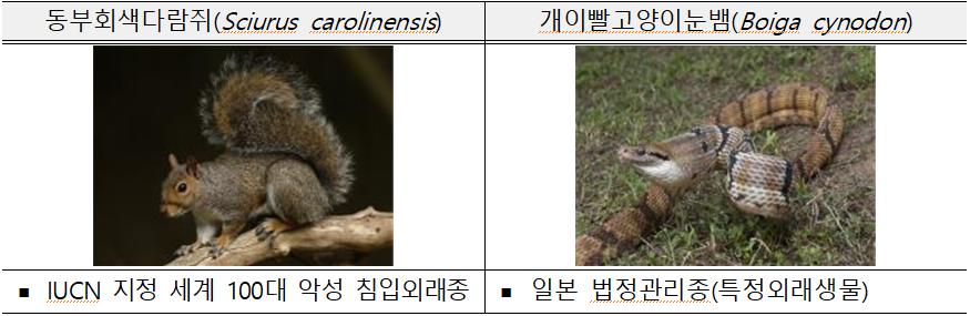 동부회색다람쥐(Sciurus carolinensis)  ? IUCN 지정 세계 100대 악성 침입외래종  개이빨고양이눈뱀(Boiga cynodon)  ? 일본 법정관리종(특정외래생물)