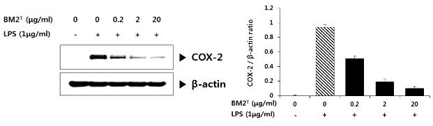 BM2 균주 추출물의 항염증 효능