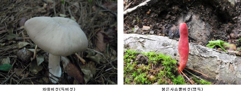 독버섯 사진
