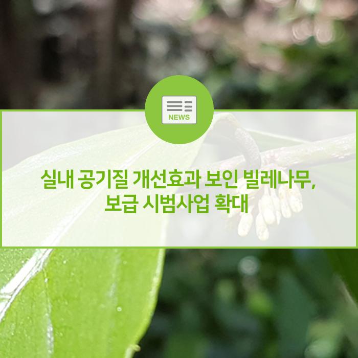 실내 공기질 개선 효과 보인 빌레나무, 보급 시범사업 확대